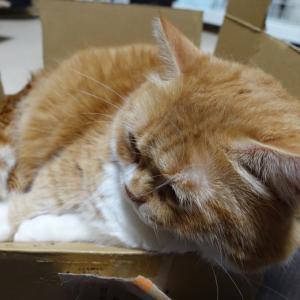 四角い猫と丸い猫??
