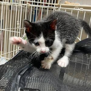 突然降参する子猫