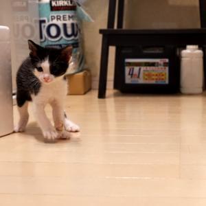 ひとりでできるようになった子猫の動画