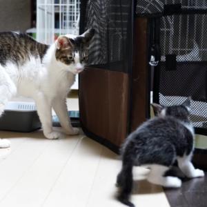 子猫が追っかけっこからの事故!?