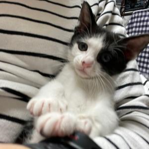 子猫の威嚇が可愛い