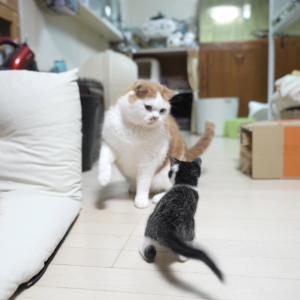 勝負を挑む子猫!?