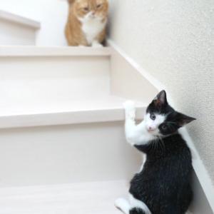 階段が登れるようになった子猫