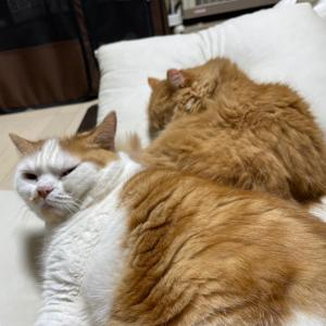 みんなに優しいお兄さん猫