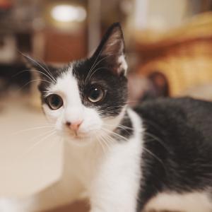 写真好きな子猫と猫家族