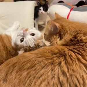 今夜の仲良し猫家族