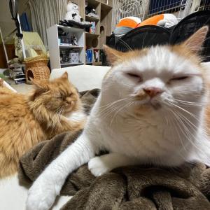 猫のうどん職人親子