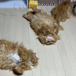 転がる猫たち