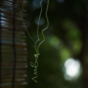 蔓と木洩れ日