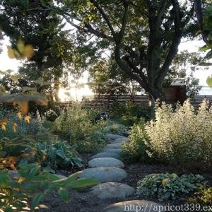 秋の庭しごとスタート!苗の植えつけの下準備