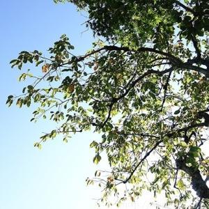 秋の庭しごと 宿根草と低木の植えつけ