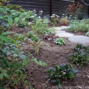 秋の庭しごと 宿根草と低木の植えつけ2