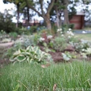 秋の庭しごと 宿根草と低木の植えつけ3