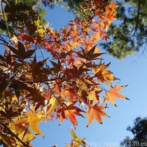 晩秋の庭しごと 低木と宿根草の紅葉