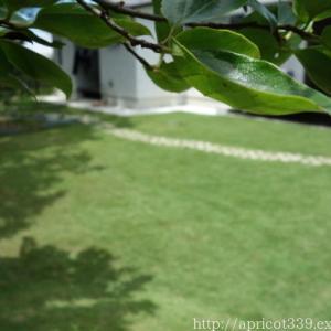 芝生・TM9に生えるやっかいな雑草と、さび病のその後