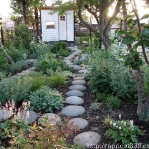宿根草の植栽スペースとガーデンシェッド この一年の振り返り