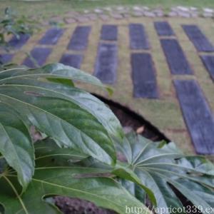 【ガーデンDIY】ペイビングと芝生張りの完成