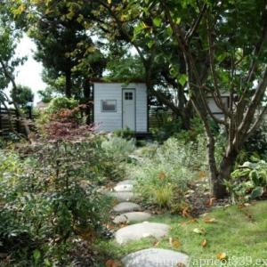 秋の庭しごと 庭に咲いた宿根草の花