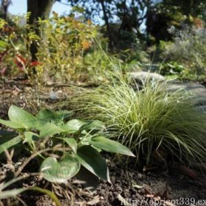 来年の春に向けて…宿根草の植えかえと苗の植えつけ2
