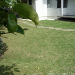 芝生・TM9のお手入れと、植栽スペースの整地スタート