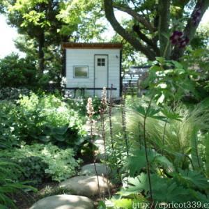 初夏の庭しごと 庭に咲いた宿根草と低木の花(シモツケ・キャットミントなど)