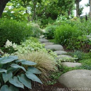 梅雨の庭しごと 宿根草の切り戻し