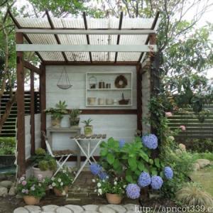小屋周りのアジサイと八重咲きペチュニア