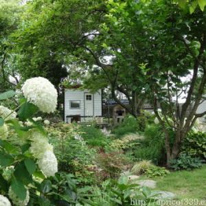 梅雨の中休み、宿根草の植栽スペースと芝生・TM9の様子