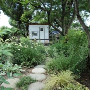 夏の庭しごと 庭に咲いた低木と宿根草の花