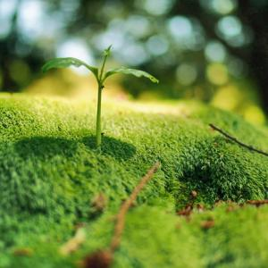 小さい植物