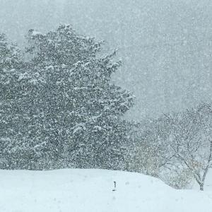 春分の日と立春の雪