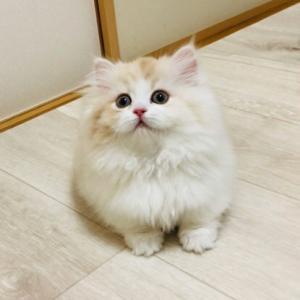 可愛い子猫ちゃんがファミリーになったよ♪・・・☆最強金運ブレスレット☆