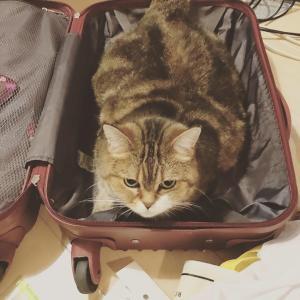 みるもも日記~かわいい子は旅へ