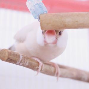 鳥たちの穏やかな日々と私の戦い。