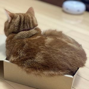 トライする箱入り坊ちゃん