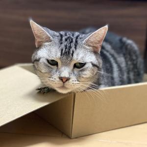 微妙なお顔の箱入り坊ちゃん