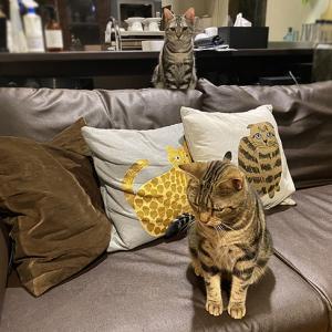2猫増えてる!!?