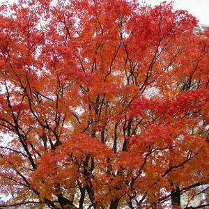 桜を見る会への補填 安倍氏の辞職は露呈してまうからだったのか 安倍氏を擁護してきた自民党、公明党議員は恥ずかしくない?