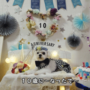 Happy Birtheday ~(*^^*)10歳も元気いっぱい~!!