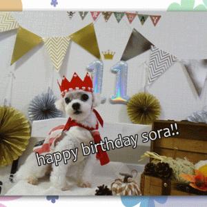 Happy Birthday~!!そら~11歳になりました~(*^^*)