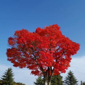今日の紅葉!