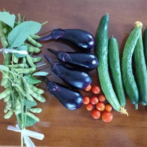 朝採り野菜!