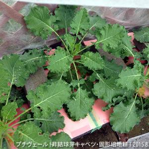 台風一過 被害はほぼナシ! 8/26