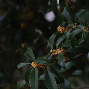 キンモクセイ香る季節のツーリング