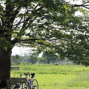 外出自粛の下での健康管理は自転車?