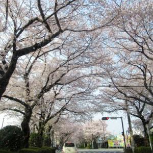 桃の花を訪ねて山梨へ 桃源郷編