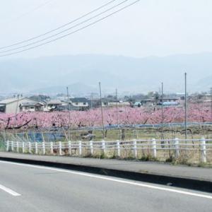 桃の花を訪ねて山梨へ フルーツパーク編