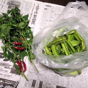 野菜のいただき物