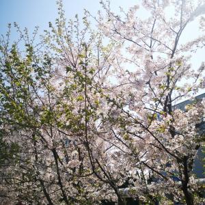Berry!Very!ベリー!!新春グローバルビュッフェ② テラスレストラン 成田ヒルトンホテル