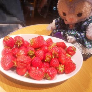 ホテルじゃないけど苺狩り スイパラのブランド苺食べ比べ